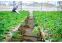 Quốc hội đồng ý miễn thuế sử dụng đất nông nghiệp đến năm 2025